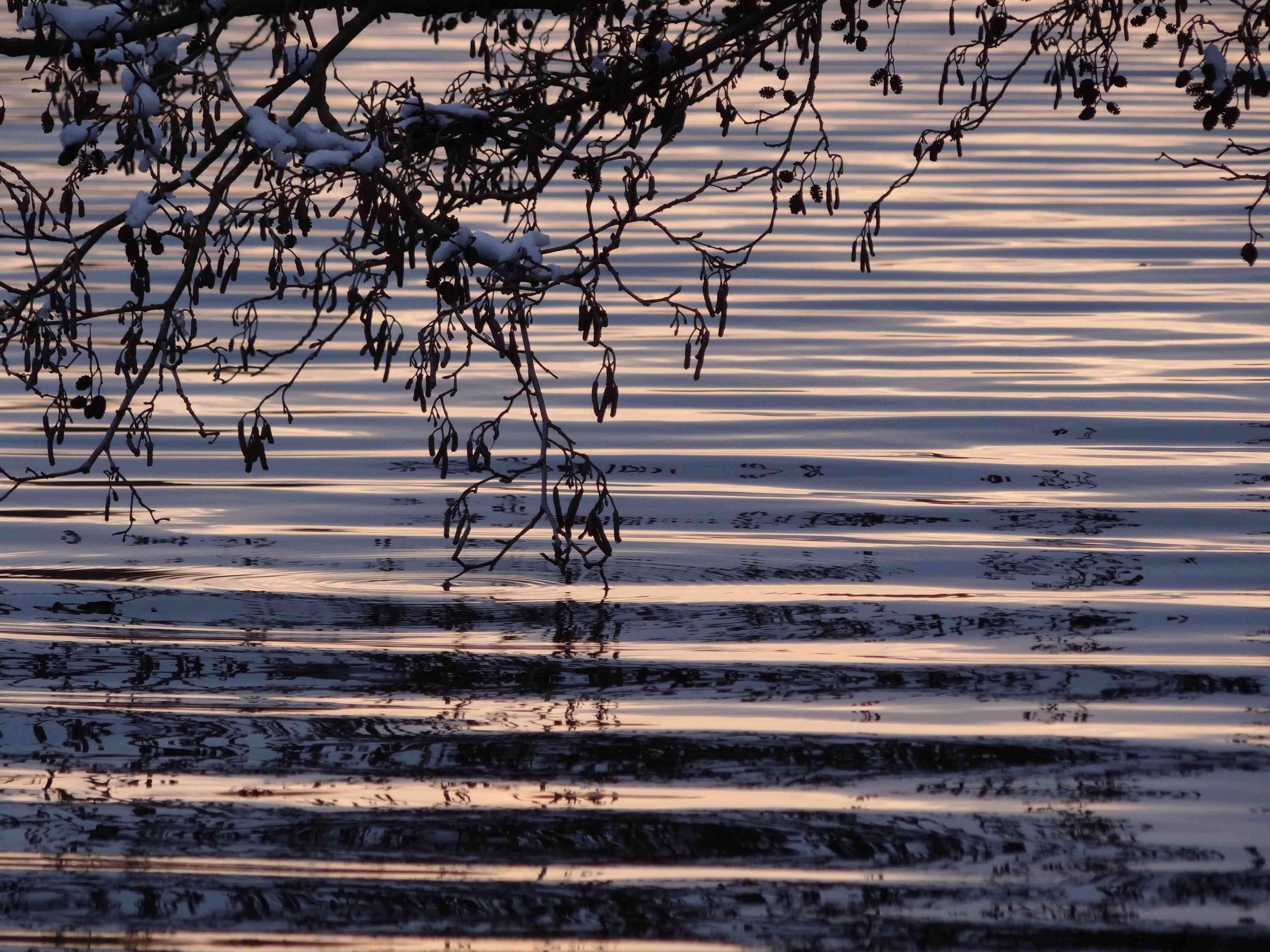 Ahrensee-Spiegelung-Abendlicht