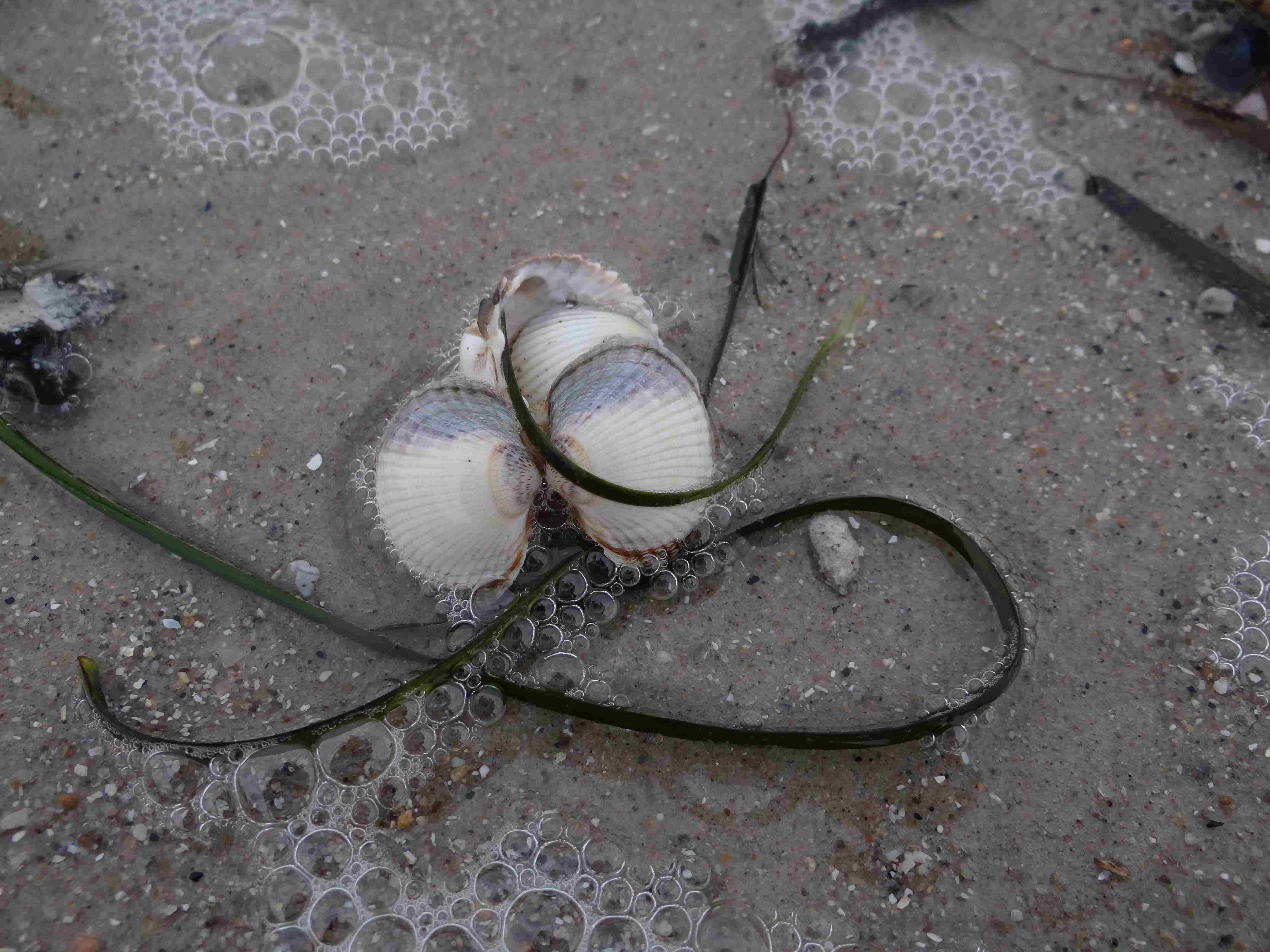 Muschelkuscheln