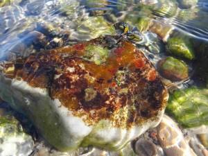 bunter Stein unter Wasser